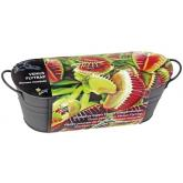 Buzzy Washing Bowl Venus Fly Trap